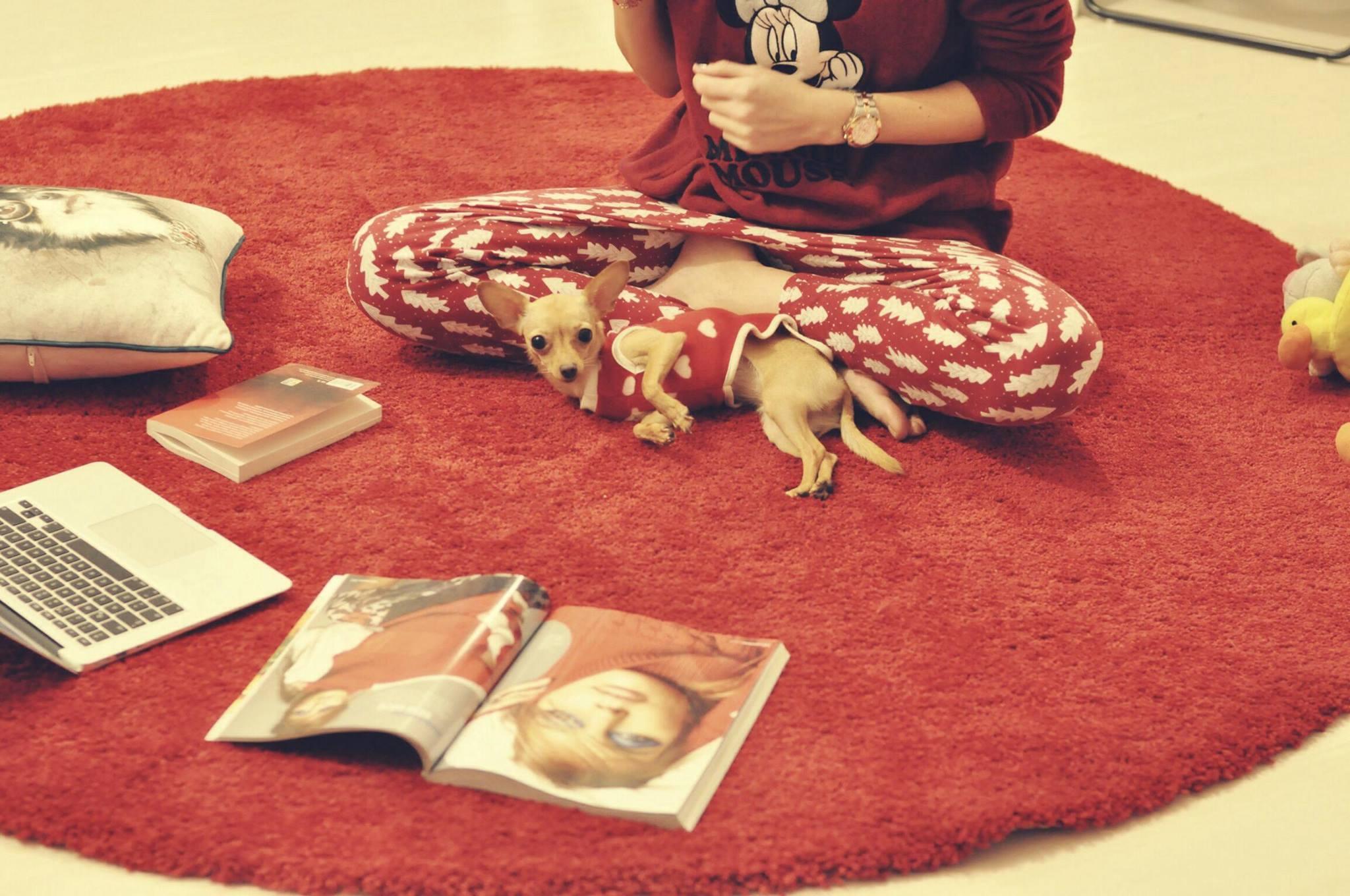 iyi geceler pijama kopek burcu ozcan chihuahua mira kopek ve sahipleri bir ornek 1