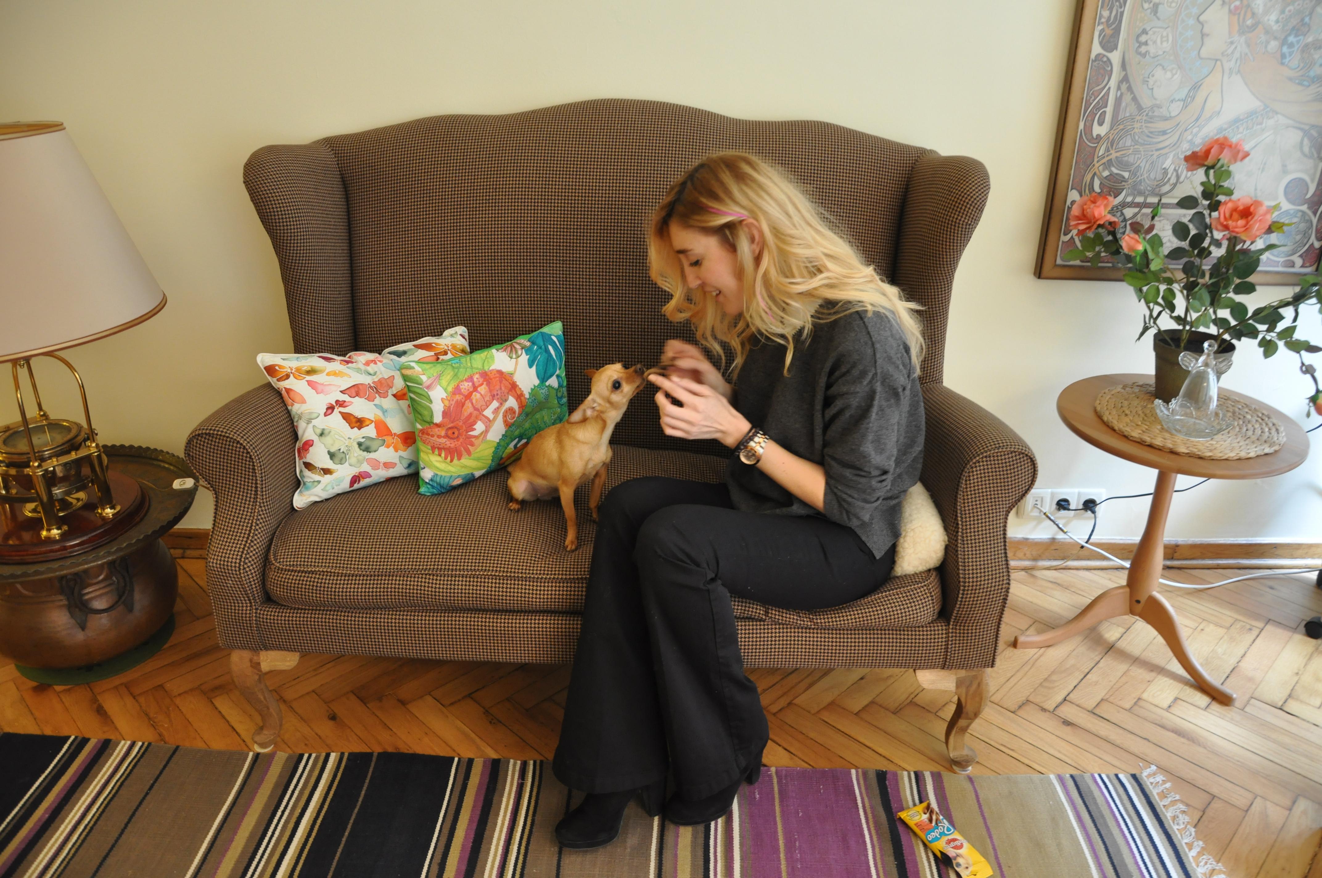misafirlik köpegimle misafirlikteyim ne yapmalıyım burcu ozcan chihuahua mira 9