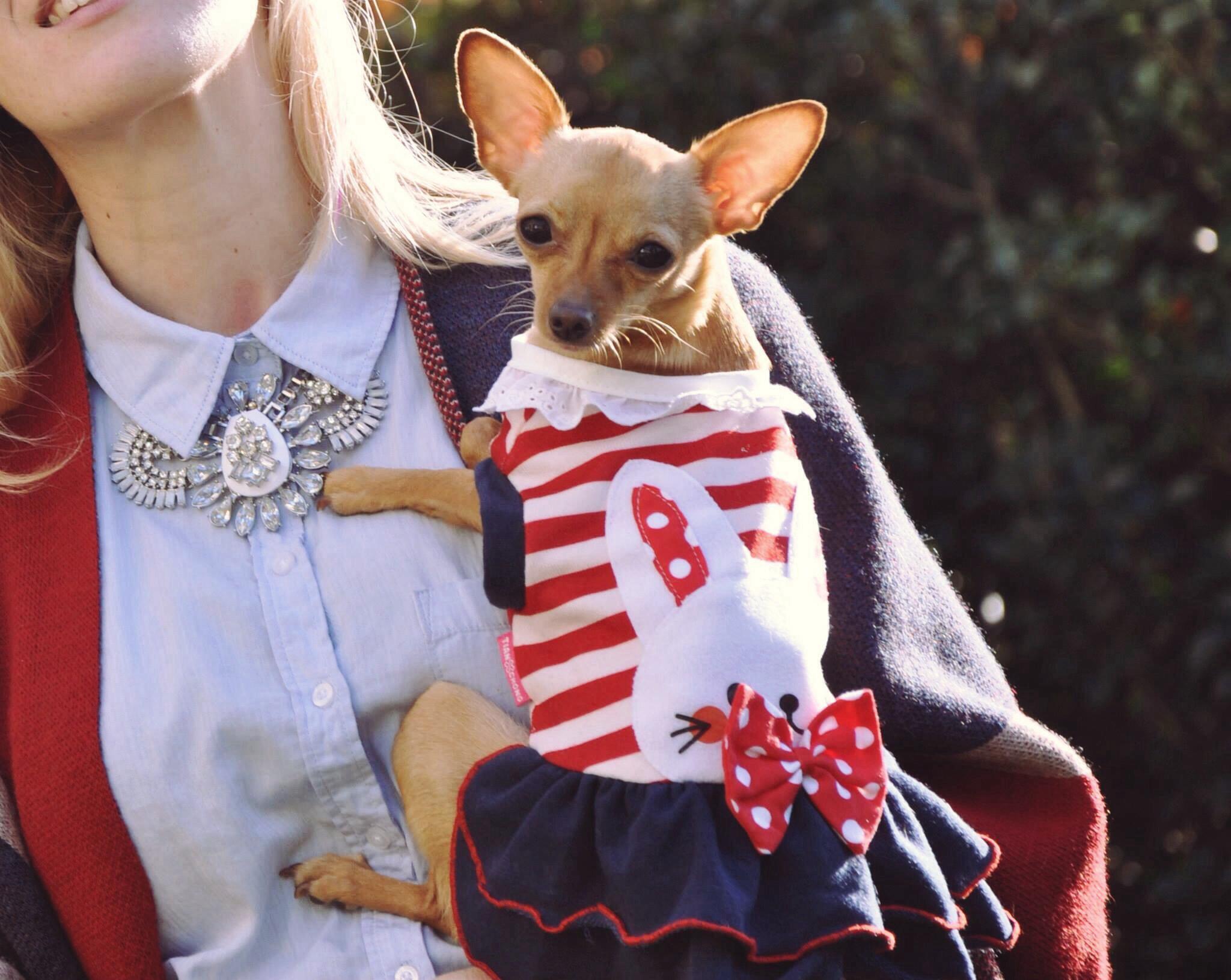 cat&dog-catdog-catanddogdergi-chihuahua-mira-burcu-ozcan-zorlu-center-zorlucenter