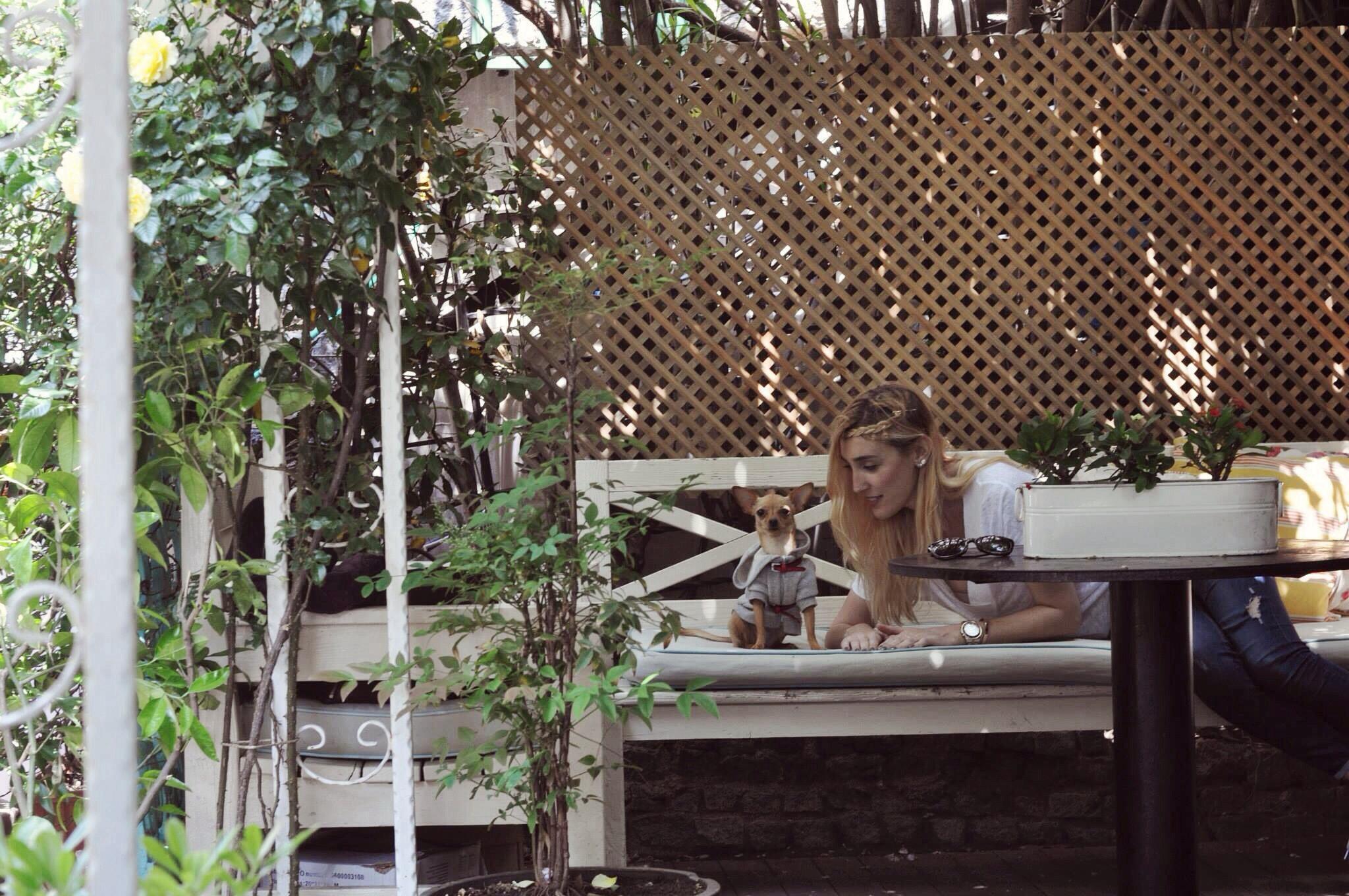 kopek girebilir, assk kahve-burcu-ozcan-assk-kahve-asskcafe-kurucesme-wuufbox-zarabasic-chihuahua_mira (20)