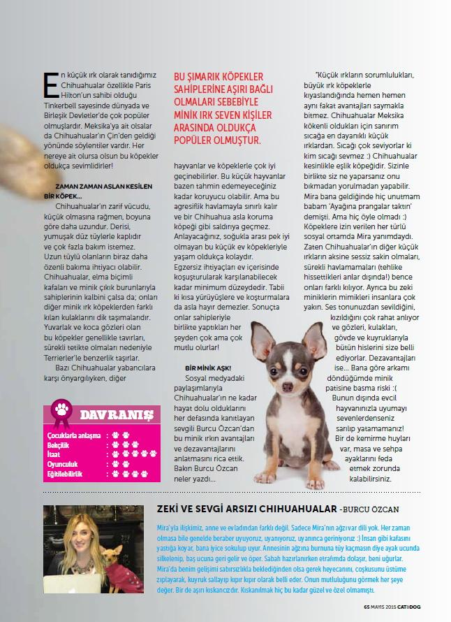 chihuahua_mira_catanddogdergi_cat&dog_magazine 1