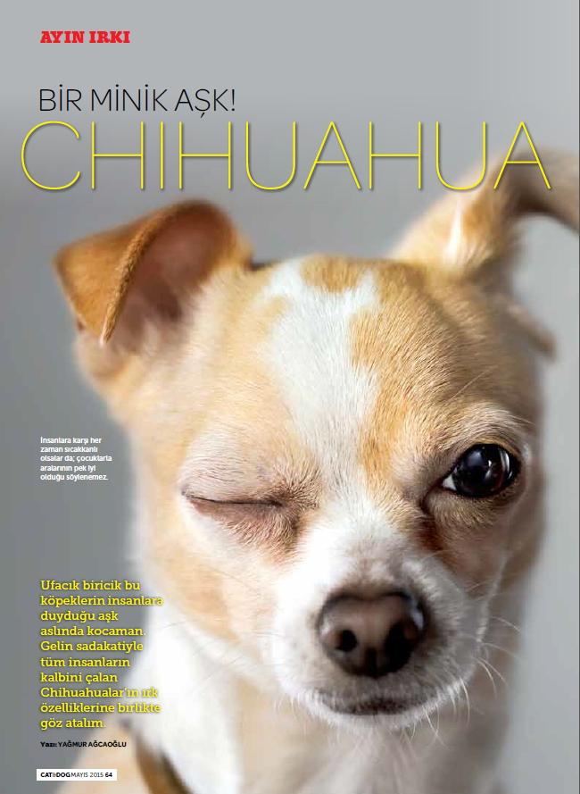chihuahua_mira_catanddogdergi_cat&dog_magazine