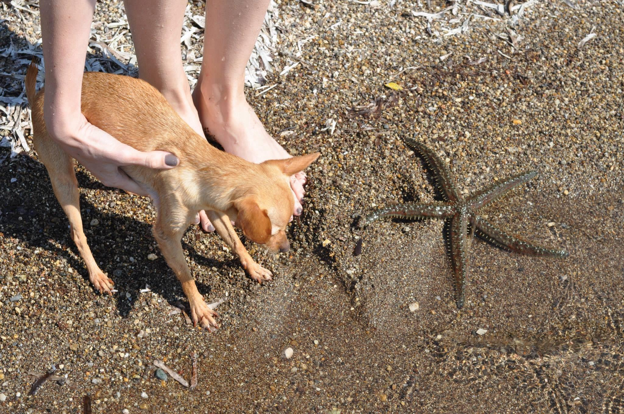 deniz,kum,gunes,burcu,ozcan,chihuahua_mira,illesteva,sunglasses (4)