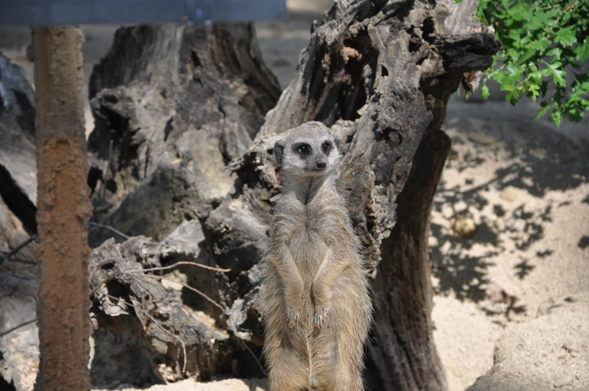 wilhelma_zoo_hayvanatbahcesi_stuttgart_burcu_ozcan_chihuahua_mira_burcuozcan_zara(11)