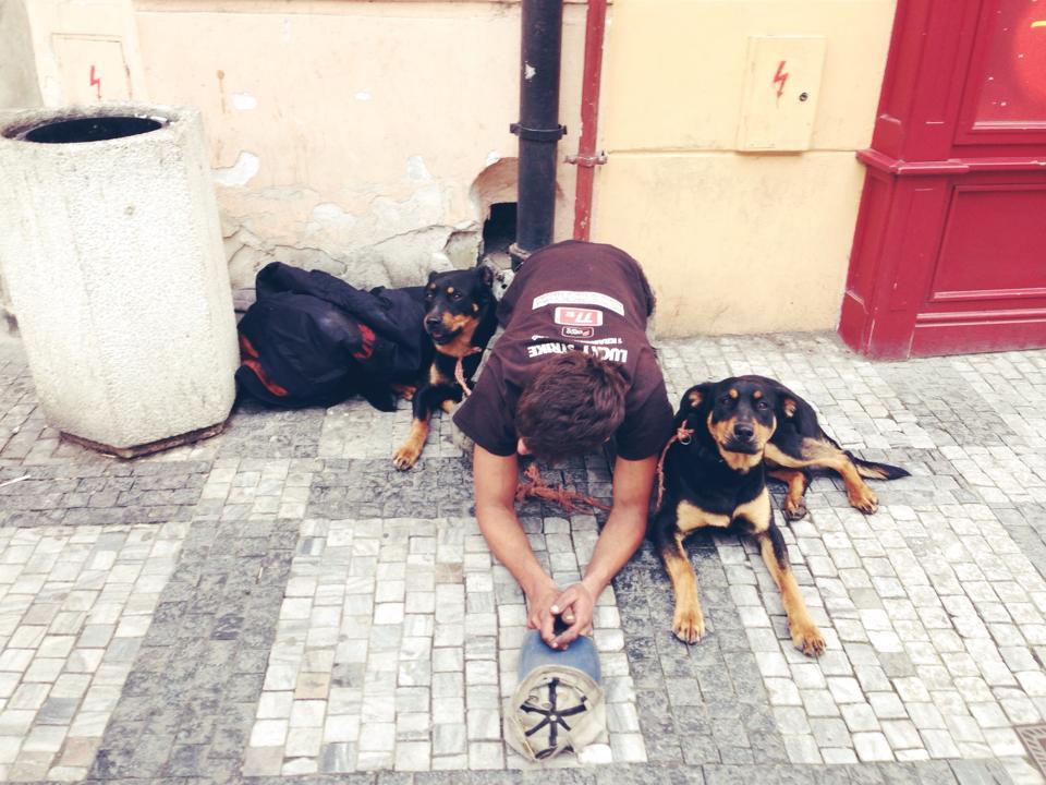 burcu_ozcan_cat&dog_dergisi_chihuahua_mira_diaryofburcu_cat_and_dog_magazine (2)