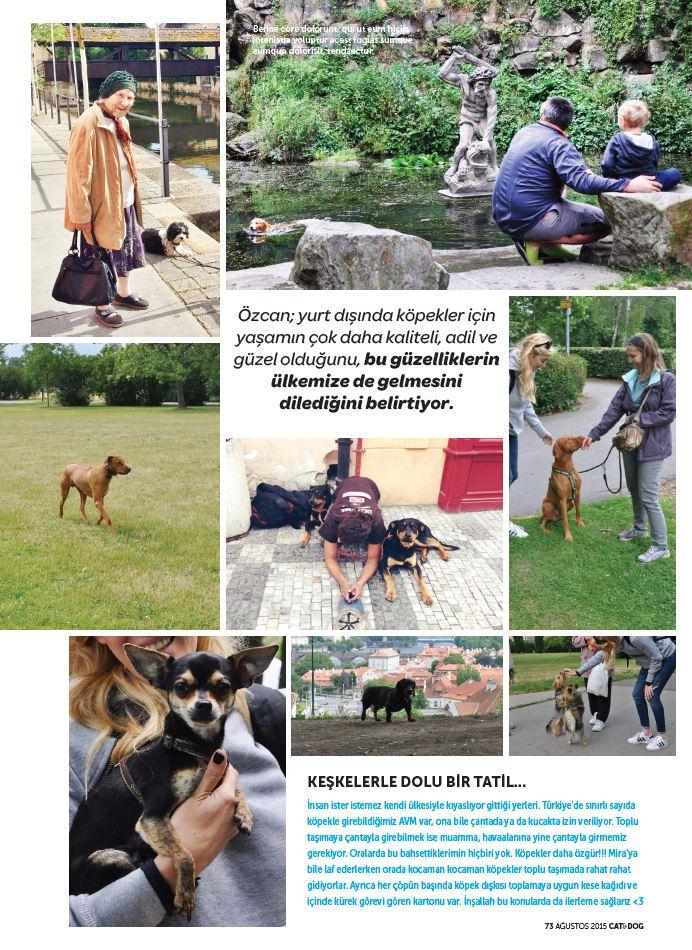 burcu_ozcan_cat&dog_dergisi_chihuahua_mira_diaryofburcu_cat_and_dog_magazine (2)3
