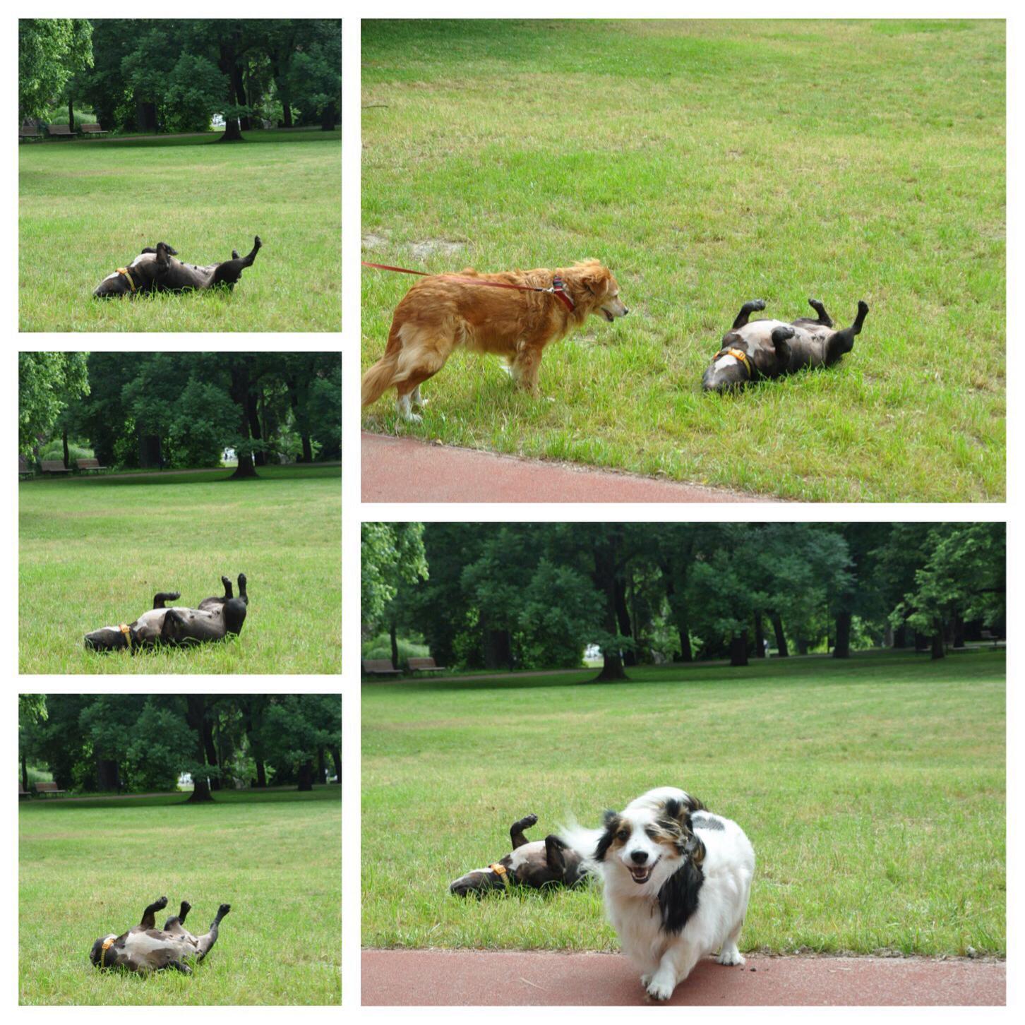burcu_ozcan_cat&dog_dergisi_chihuahua_mira_diaryofburcu_cat_and_dog_magazine (7)