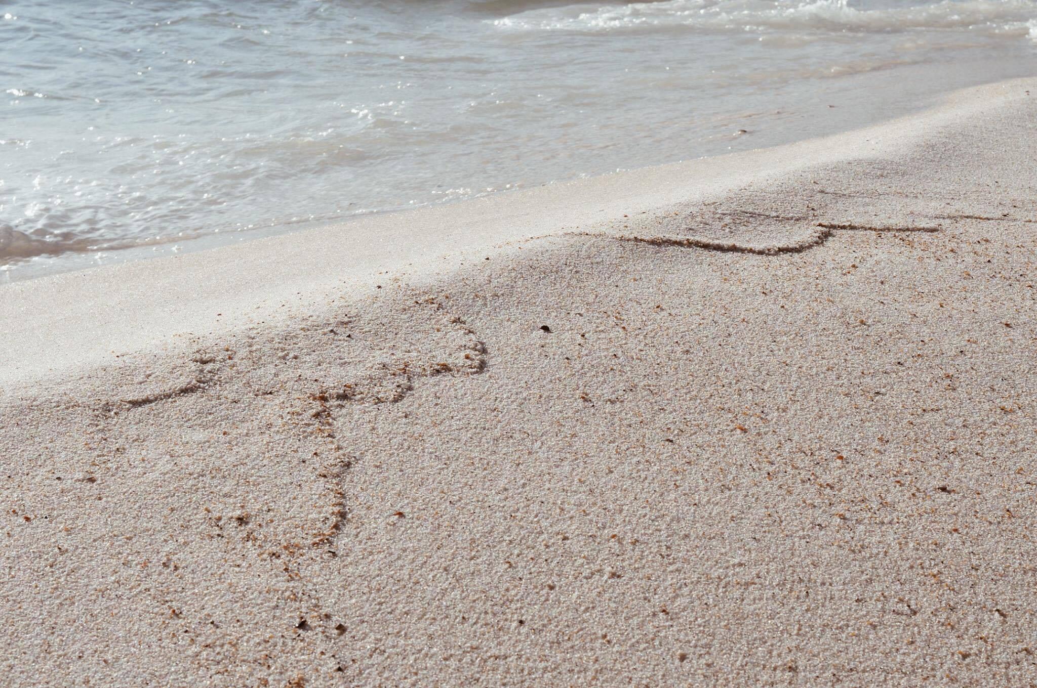 burcu_ozcan_chihuahua_mira_palmarina_palmalife_bodrum_yalikavak_palmalife_beach_burcuozcan_5
