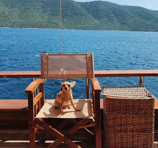 köpek tekne turu mavi yolculuk